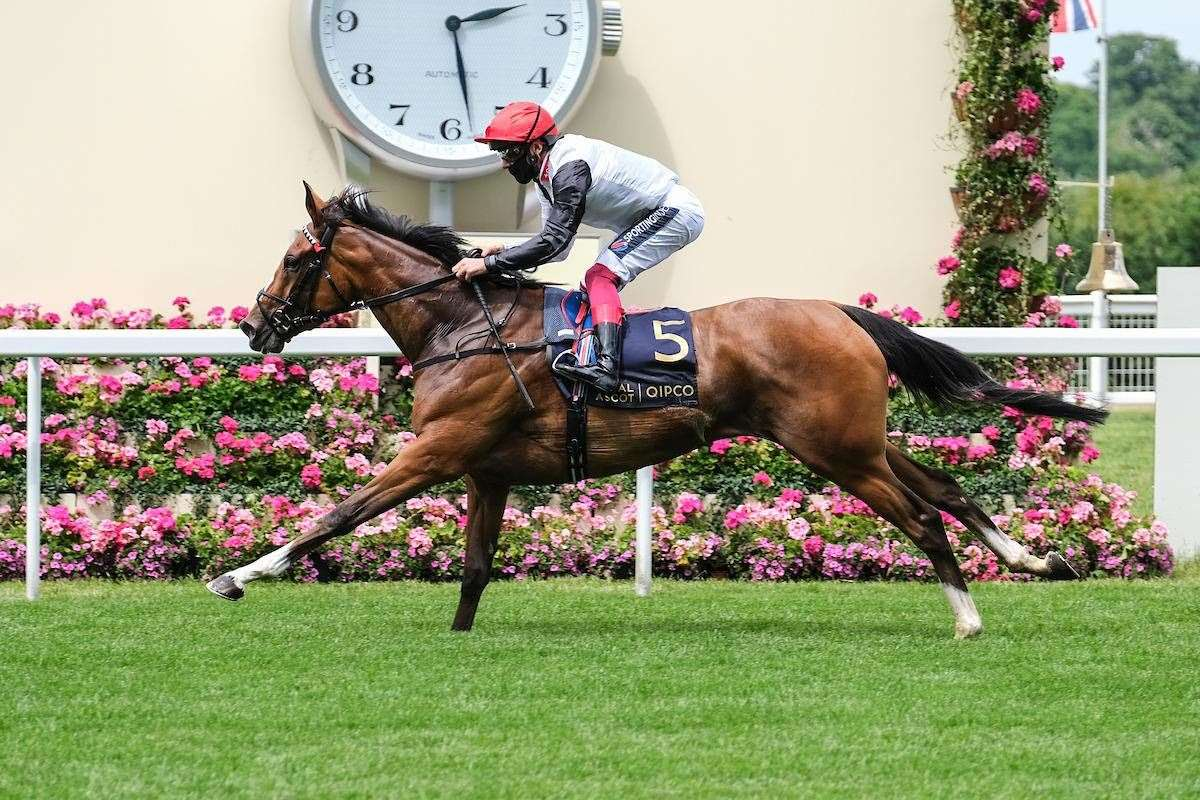 Frankly Darling wins at Royal Ascot (36747270)