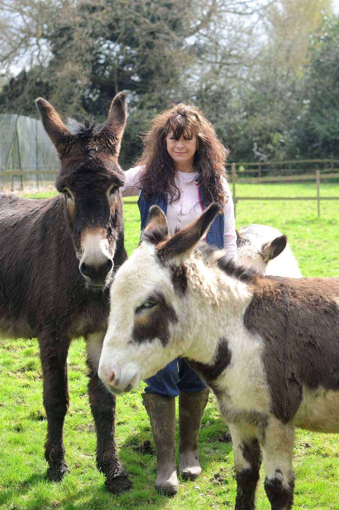 Frenchs Care Haven has launched an appeal for a new site after having just weeks to vacate. Founder Jann Turner is hoping to secure a new site in Hadleigh for the donkeys and horses she cares for at the centre....PICTURE: Mecha Morton. .. (14862897)