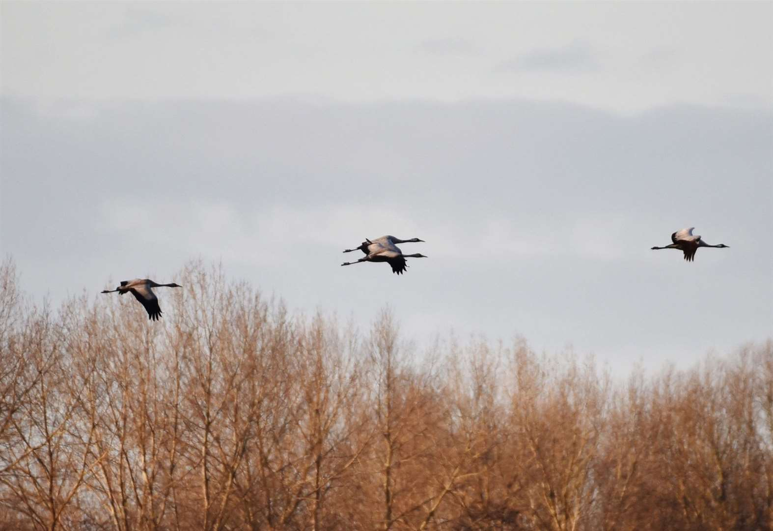 Culture: Nature stirs as spring beckons at RSPB Lakenheath Fen