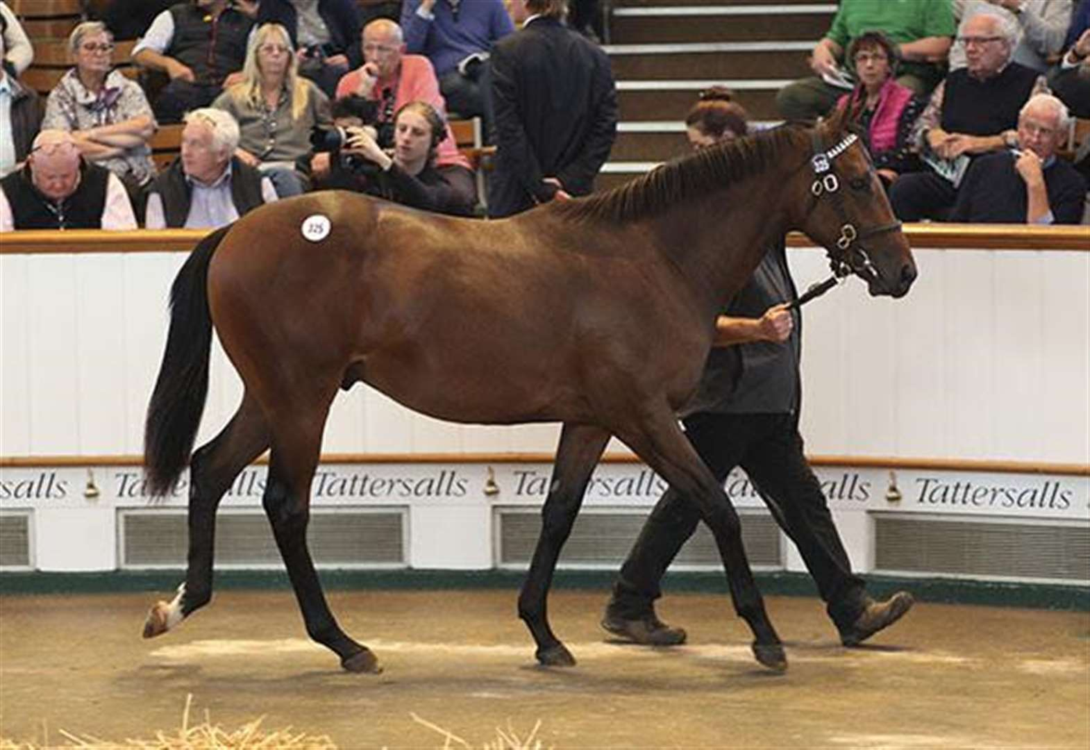Pure theatre as Lloyd Webber's colt sells at Newmarket for 3.5 million guineas