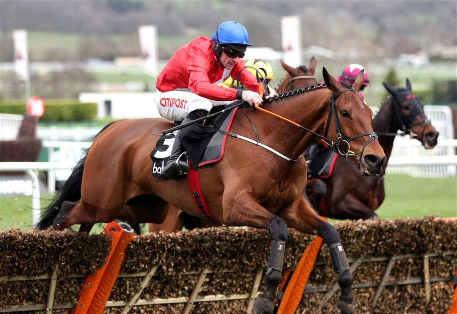 Cheltenham glory for Cheveley Park Stud