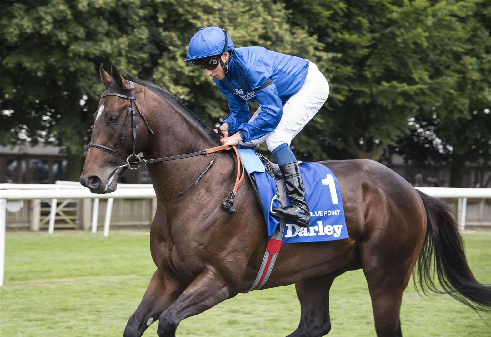 Royal Ascot star Blue Point retires