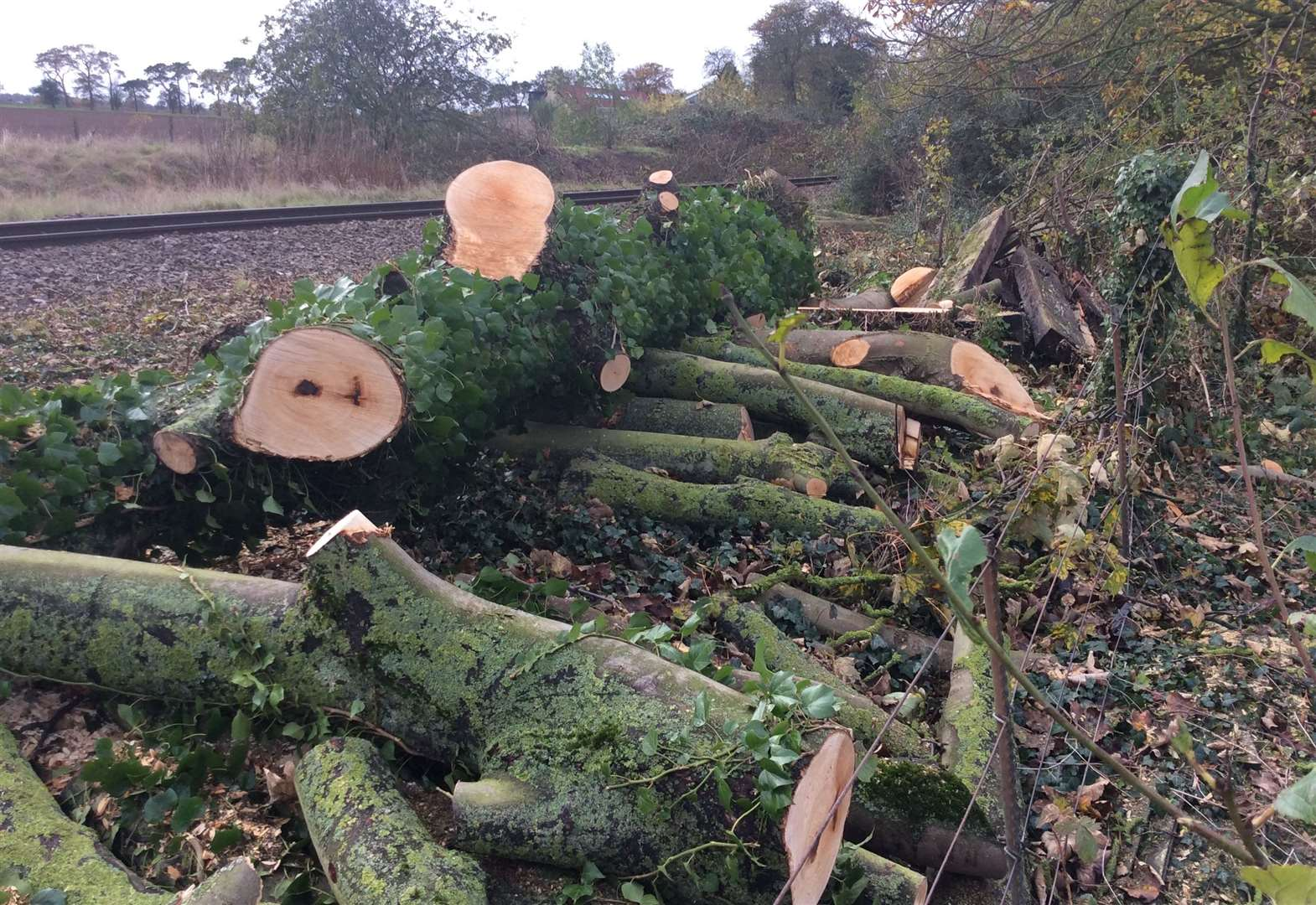 Bob's shock at Network Rail's 'chainsaw massacre'