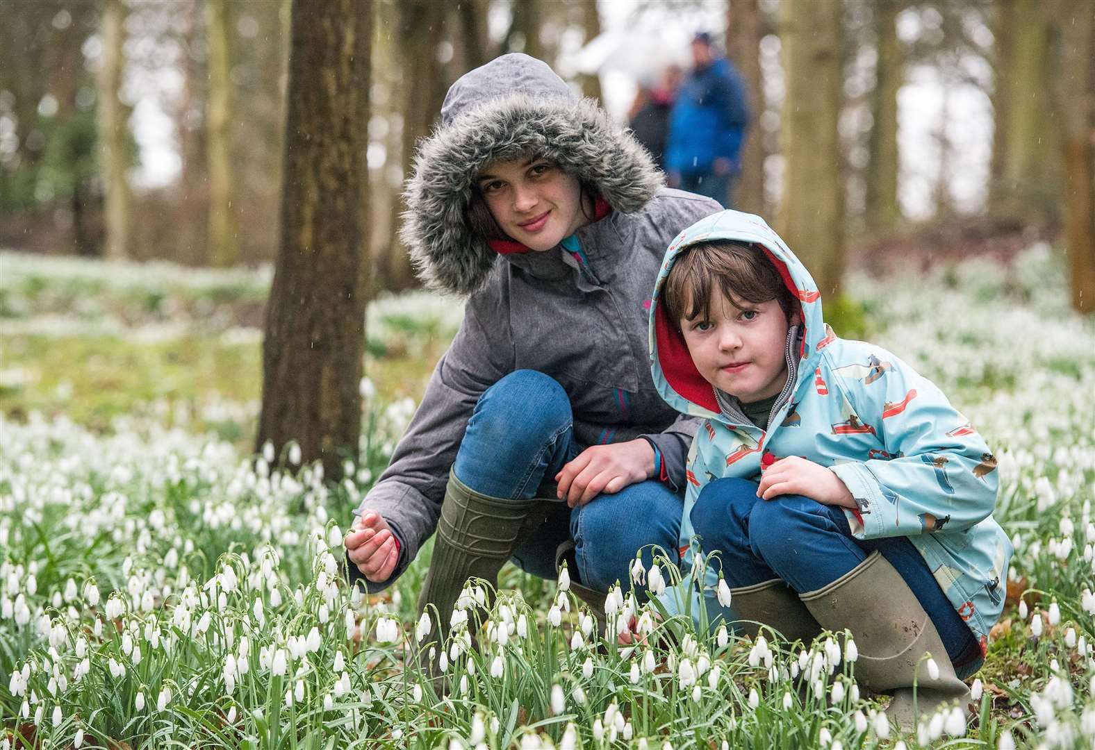 PICTURES: Walkers enjoy arrival of snowdrops at Daws Hall in Lamarsh