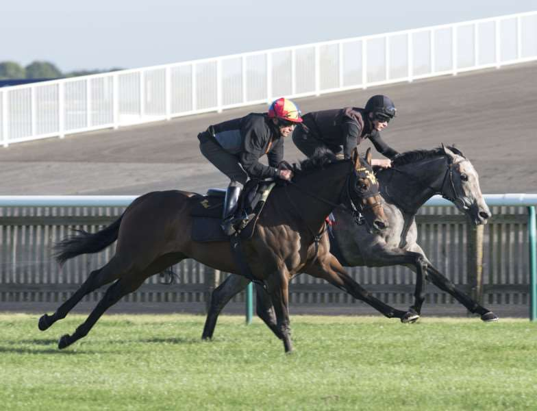 RUN OUT: Lady Aurelia is put through her paces on Newmarket's Rowley Mile Racecourse by Frankie Detorri