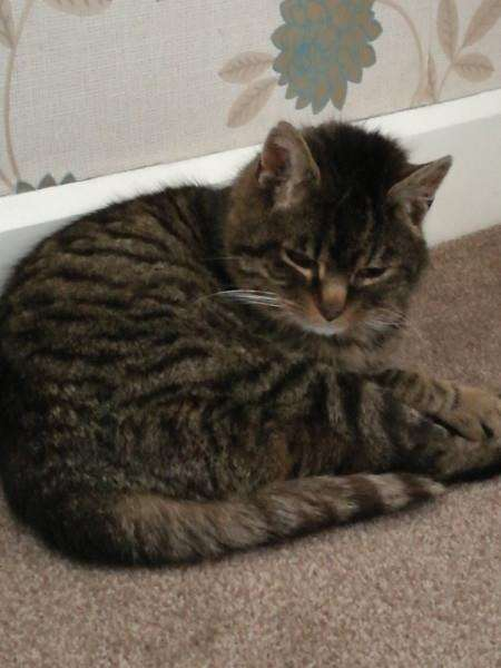 Leo the cat was shot in the Grove Road/Grove park area of Bury St Edmunds