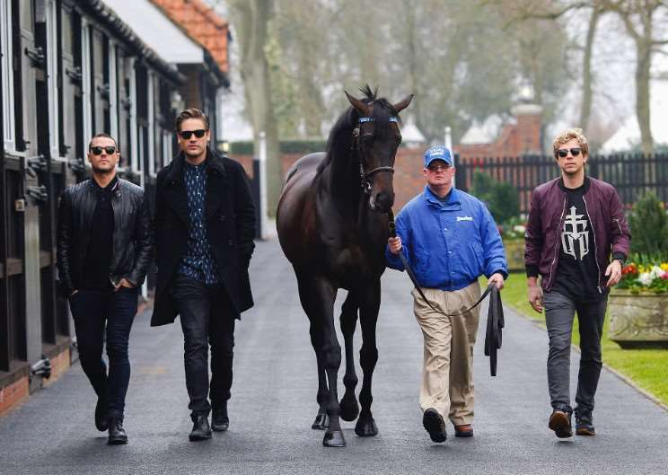 Busted at Dalham Hall Stud with Golden Horn