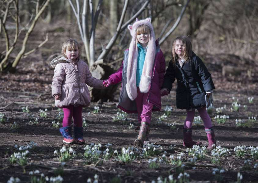 LAMARSH: Snowdrop festival'Daws Hall Nature Reserve, Daws Hall, Henny Road, Lamarsh'Kitty Fuller with Delilah and Persephone Duduid'Snowdrop Celebration'Picture Mark Westley