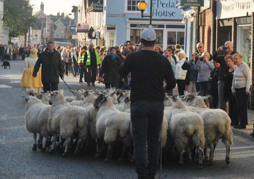 Sheep being driven down Hadleigh High Street at the finale of the town's Year of the Sheep celebrations. ANL-150930-111217001