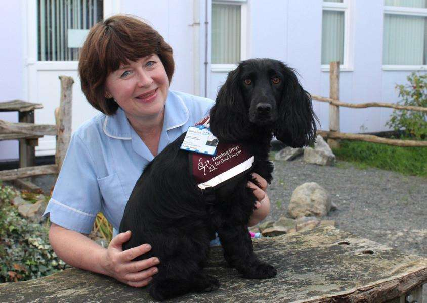 Margo Harrison, senior staff nurse at West Suffolk Hospital, with hearing dog Pebbles who helps her at home and work ANL-151119-153140001