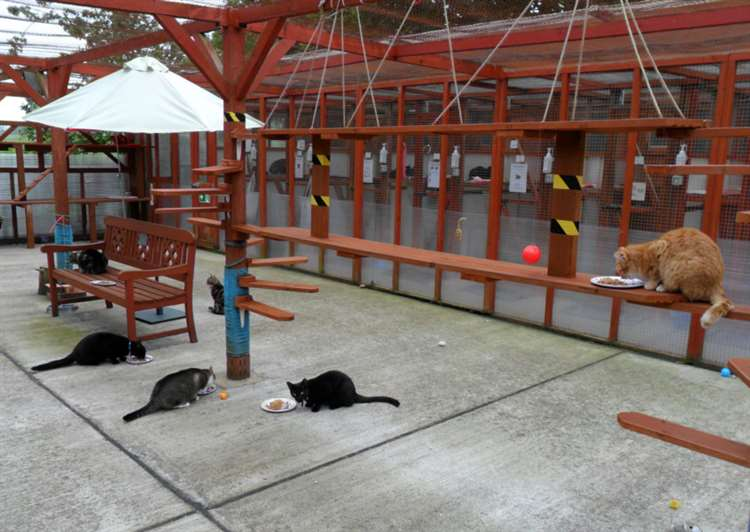 Can you give a stray cat an outdoor home?