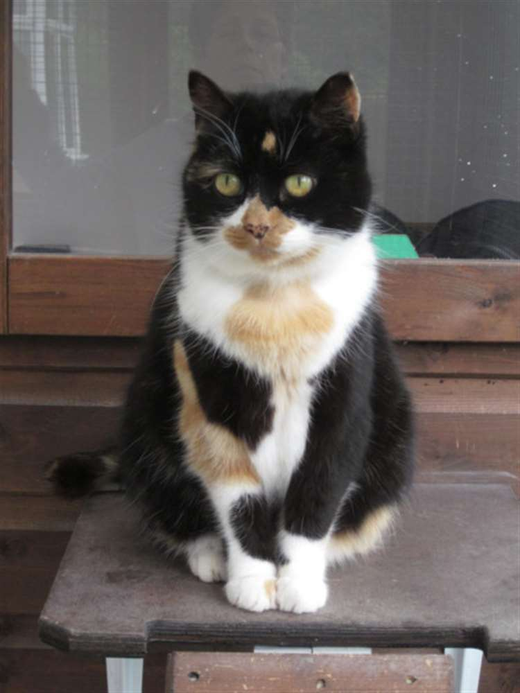 This little cat would like a new home says Bury St Edmunds