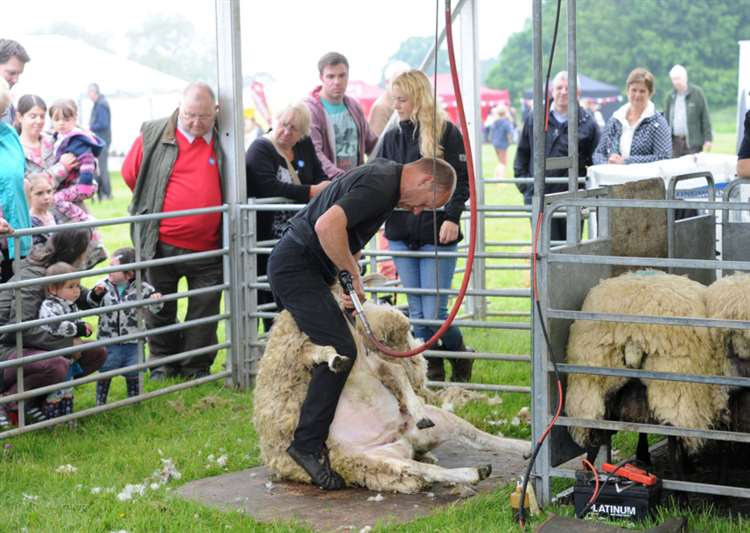Activities for the whole flock at Ickworth's wool fair
