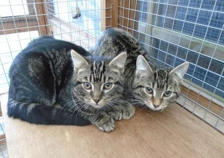 Nervous kittens would love a kindly home says Bury St