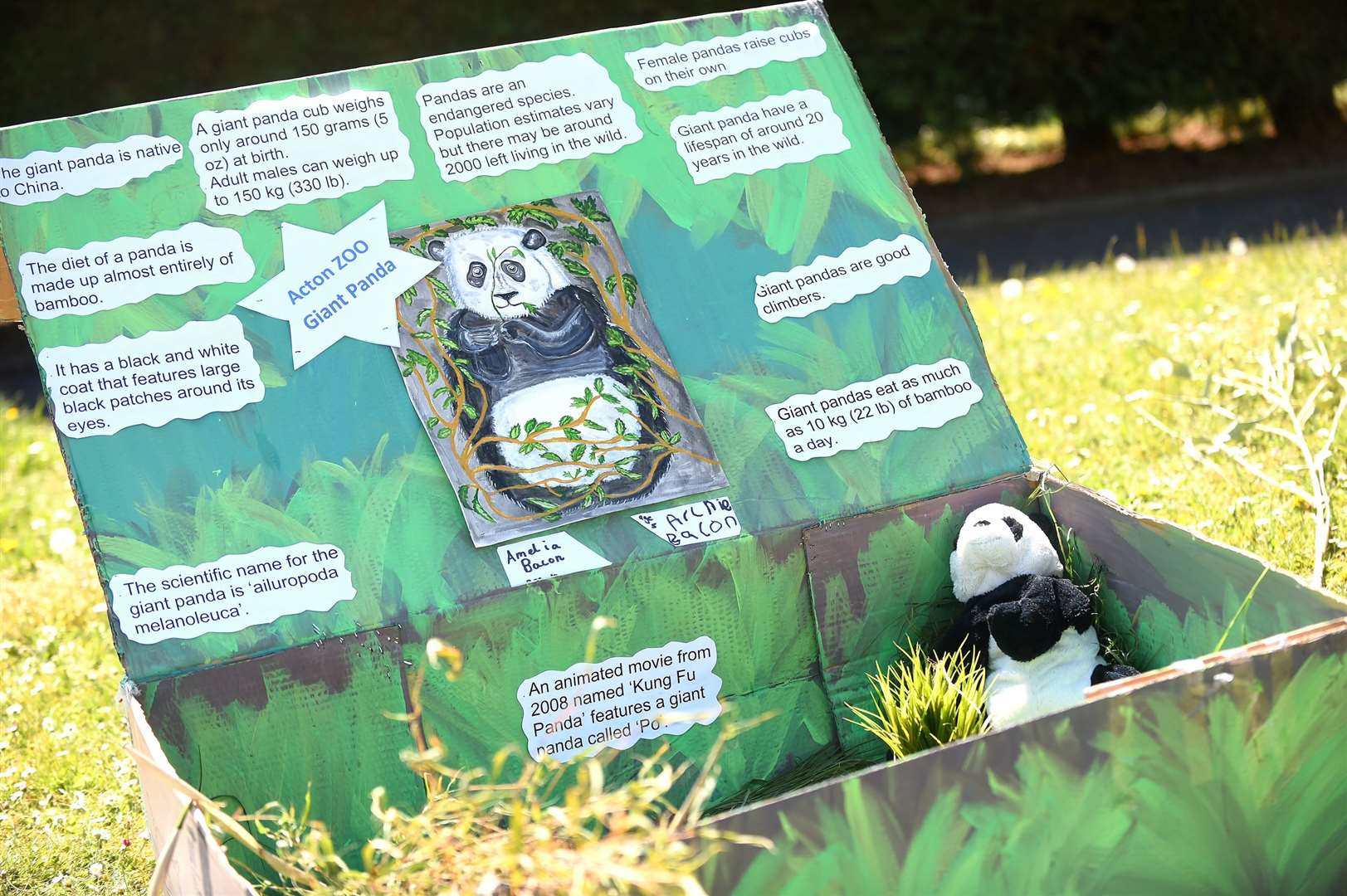 Acton Primary School teacher Katy Hammond has organised a zoo trail involving 60 households in Acton, which has encouraged children to create their own displays about animals for people to enjoy while walking in the village....PICTURE: Mecha Morton .... (34023160)