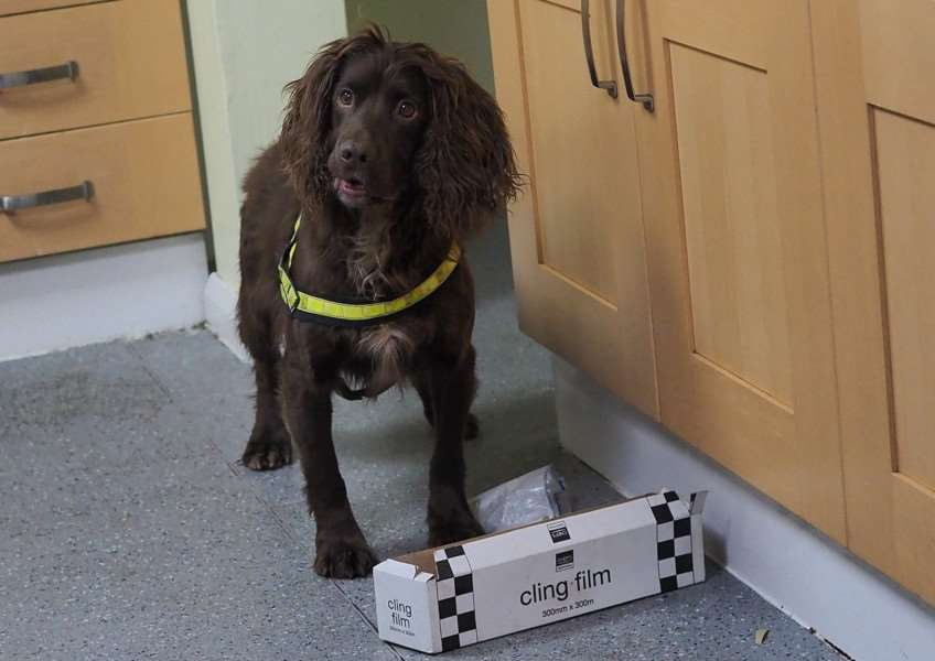 Suffolk Police springer spaniel Woody says 'it's in there' after finding 'drugs' hidden by his handley PC Tony Russell