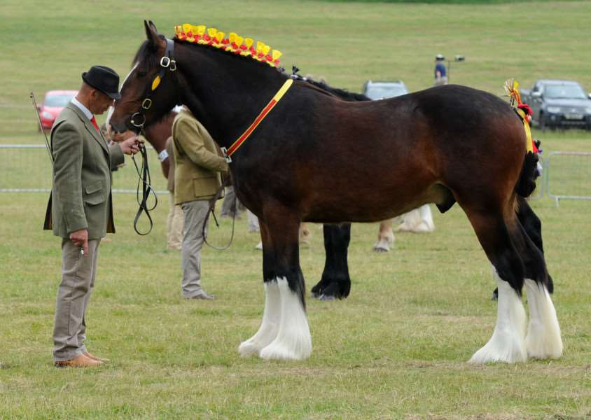 The beauty and strength of Shire, Suffolk Punches and Percherons were on display