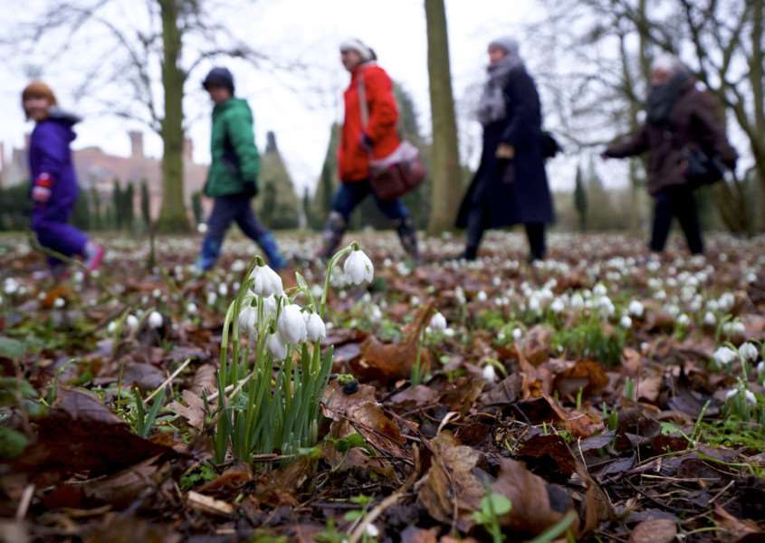 Long Melford, Suffolk. Snowdrop walk around the grounds of Kentwell Hall in Long Melford. ''Picture: MARK BULLIMORE