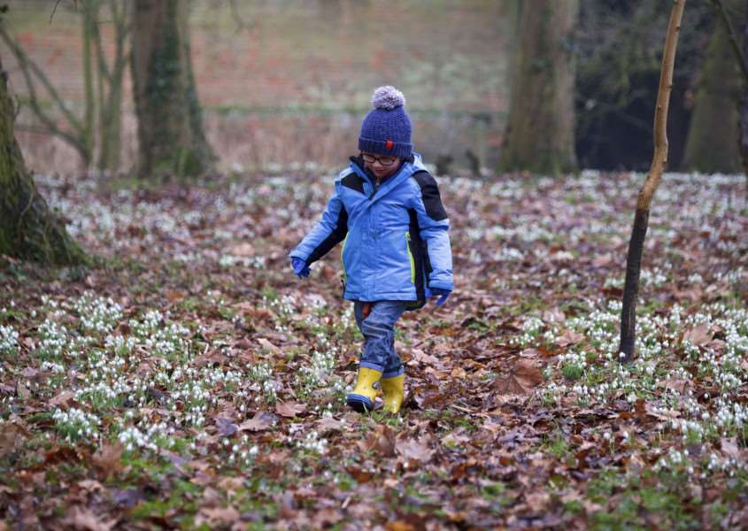 Long Melford, Suffolk. Snowdrop walk around the grounds of Kentwell Hall in Long Melford. Pictured is Dylan Eccles from Halstead.''Picture: MARK BULLIMORE