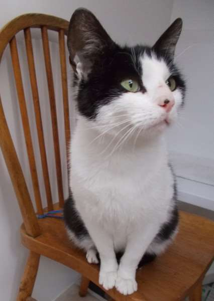 Tiffany is being looked after by Bury St Edmunds Cats Protection after being brought in as a stray