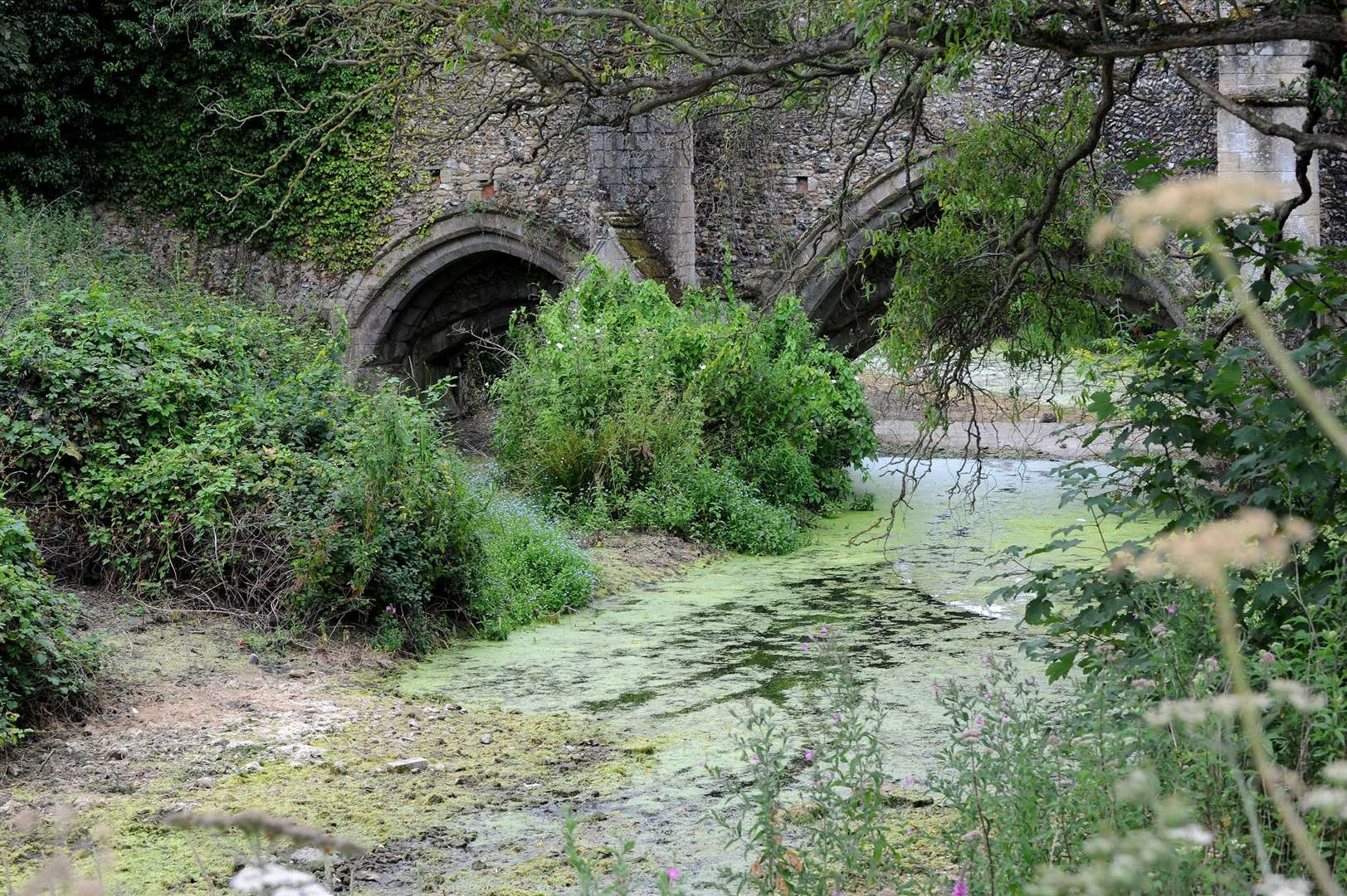 Fish have started to die in large numbers in the river between Eastgate street and the Abbey Gardens. The water is lower than usual with a large amount of algae. Picture by Mecha Morton.