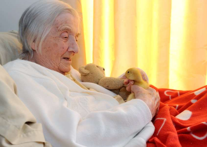 Risby Hall has six ducklings at the nursing home'.'Pictured: Resident Gwen Berney'''''PICTURE: Mecha Morton