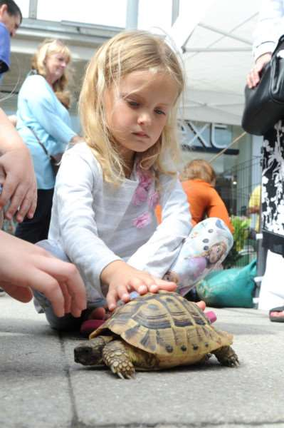Six-year-old Lou Lou Eccles with Crush, a Hermann's tortoise