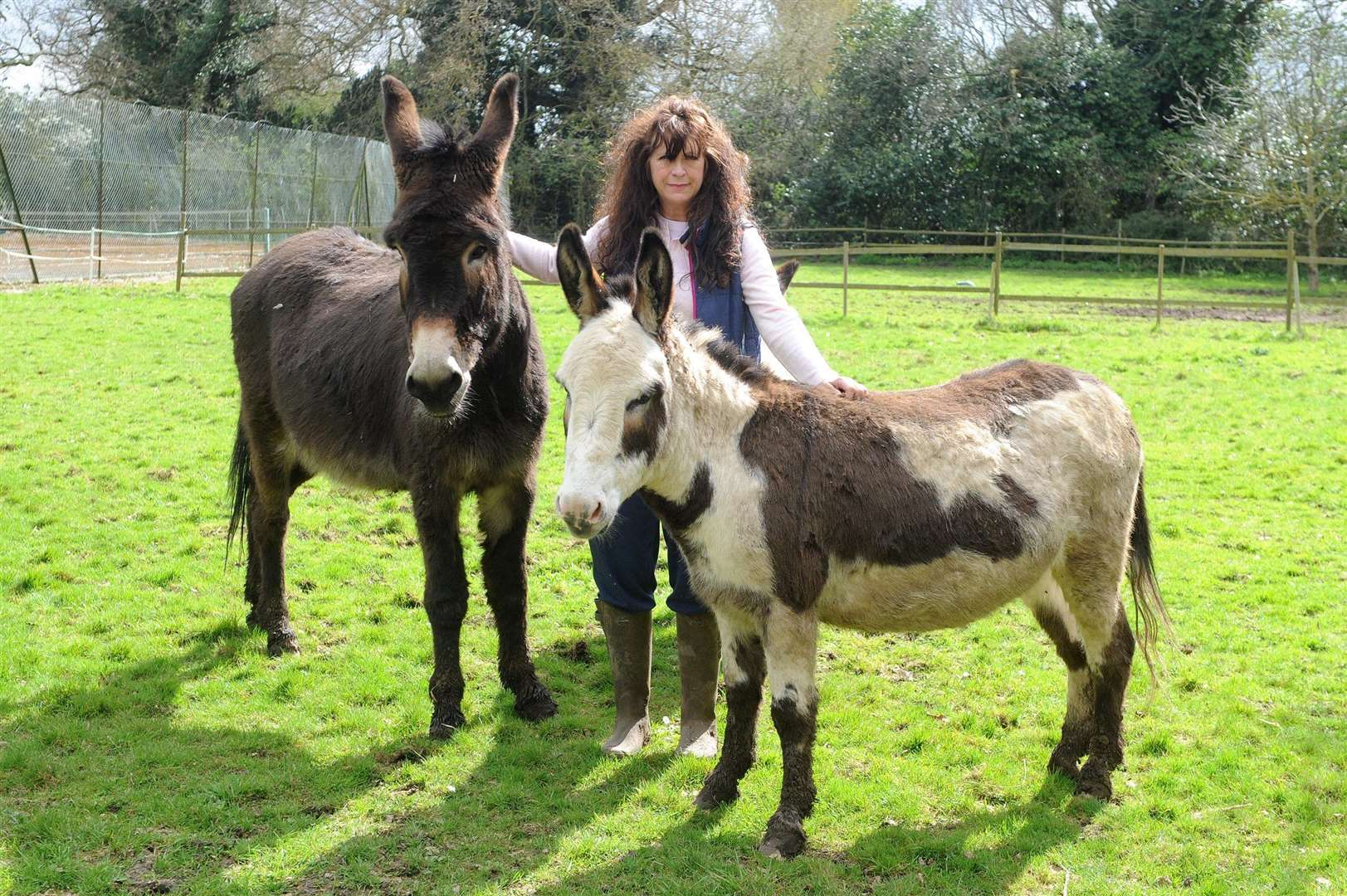 Frenchs Care Haven has launched an appeal for a new site after having just weeks to vacate. Founder Jann Turner is hoping to secure a new site in Hadleigh for the donkeys and horses she cares for at the centre....PICTURE: Mecha Morton. .. (3176002)
