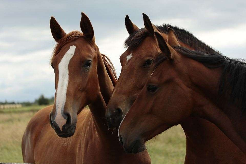 Horses were seen in Mildenhall (stock image) (8218712)