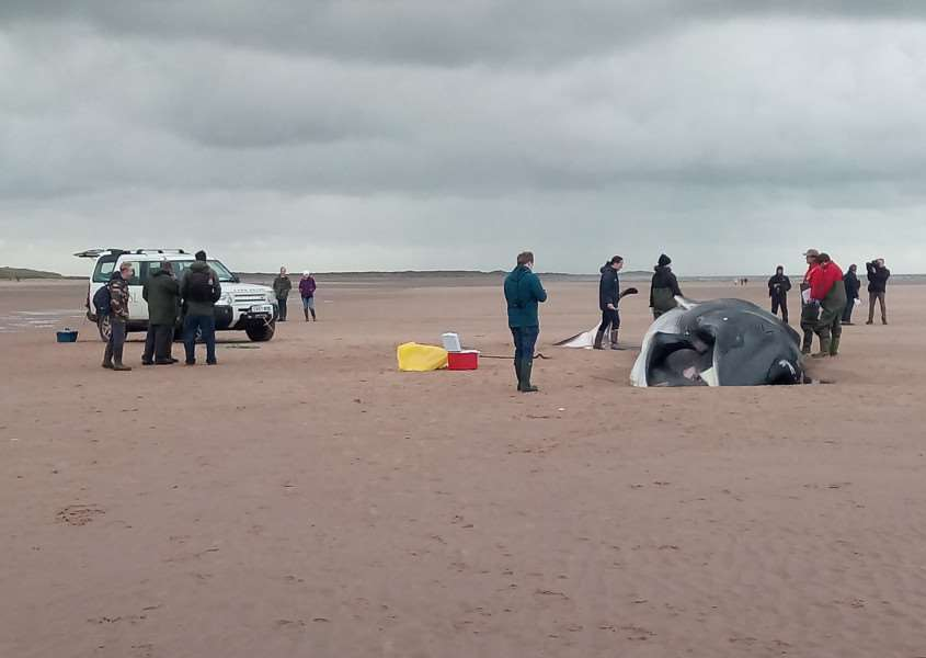 Officials examining a fin whale which washed up on Holkham beach on the afternoon of Thursday, October 20. ANL-161021-163900001