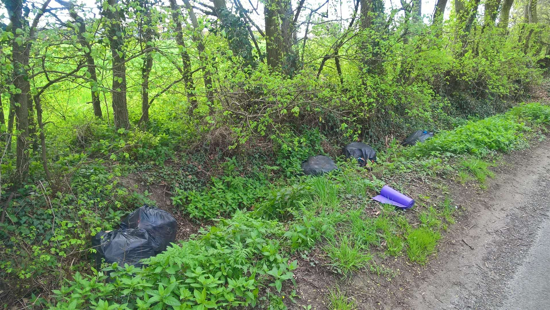 Joanne Phillips, 42, of Brendon Drive, Halstead, was ordered to pay a total of £550, after pleading guilty to fly tipping in Halstead, Little Maplestead and Ridgewell. Photo supplied by Braintree District Council. (4968569)