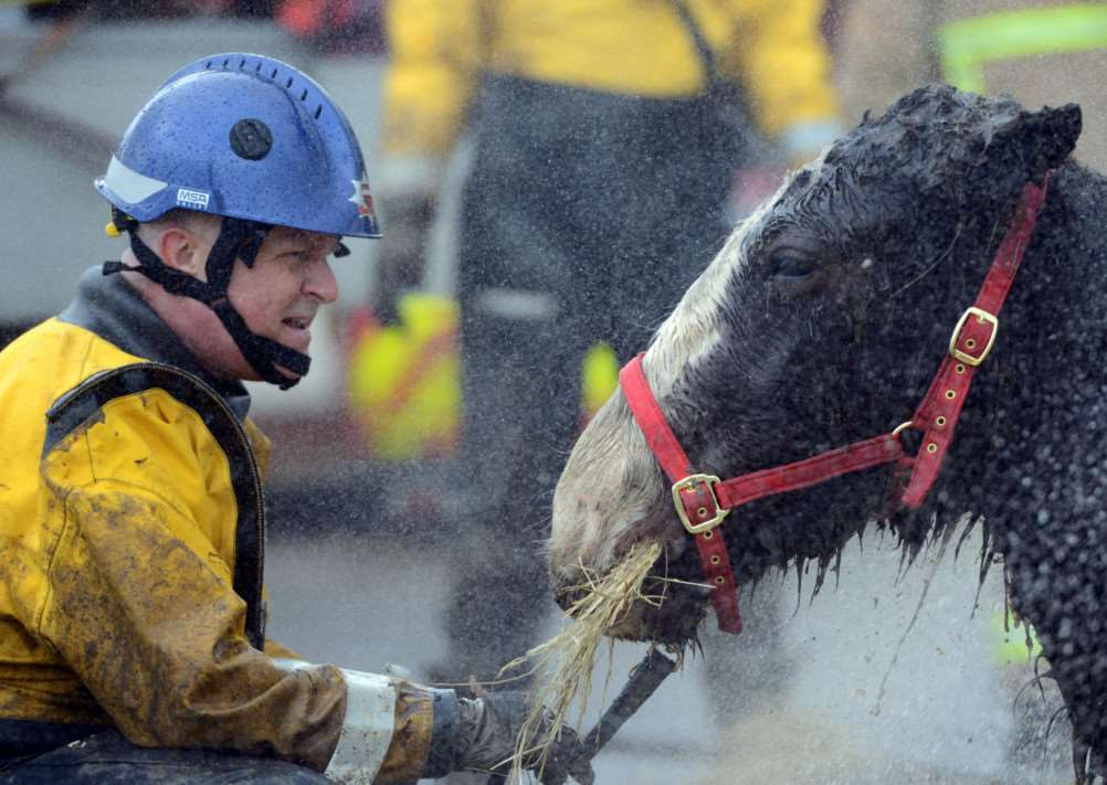 Horse rescued