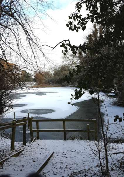 Frozen pond in the snow at Hardwick Heath 'Picture: Karen Grant