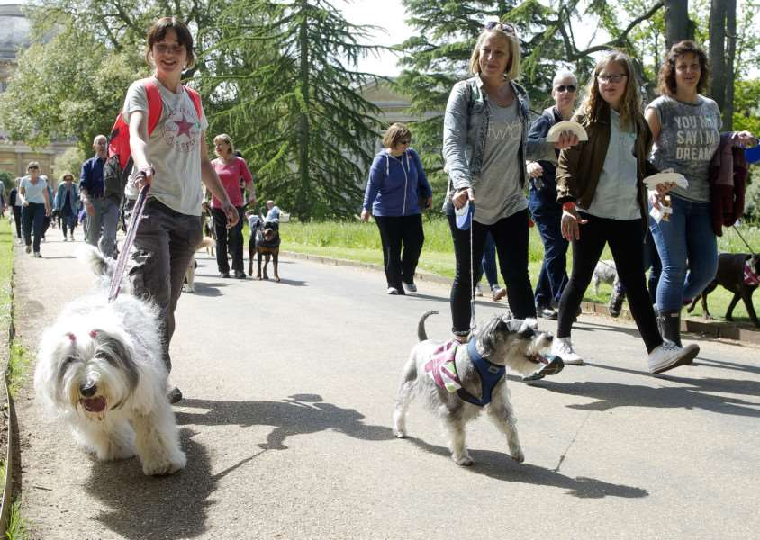The Great British Dog walk in support of Hearing Dogs for Deaf People ANL-160523-010524009