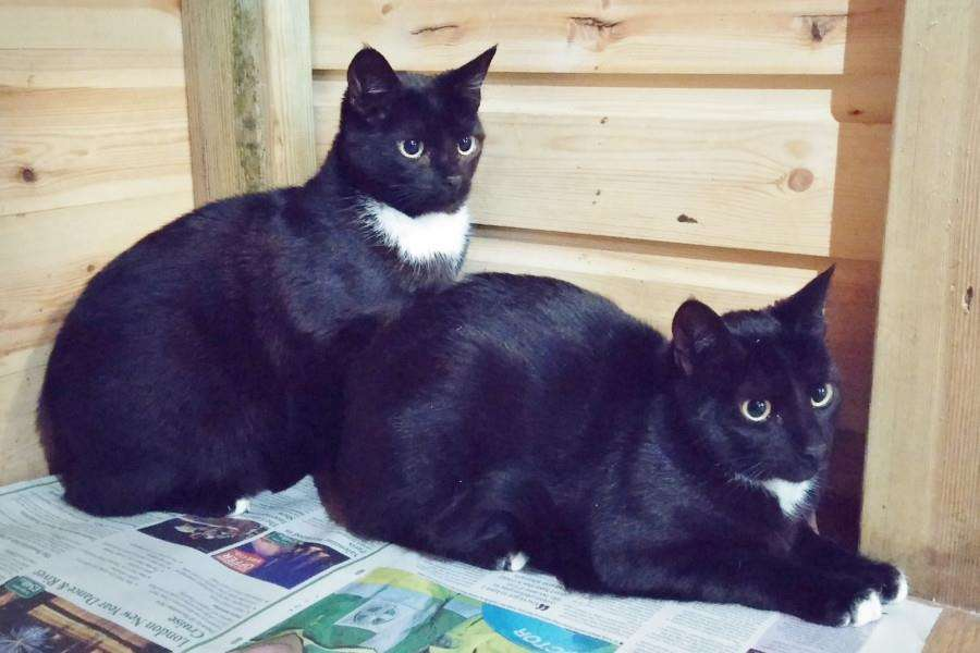 Max and Milly are featured as this week's stray and being cared for by animal charity Sesaw
