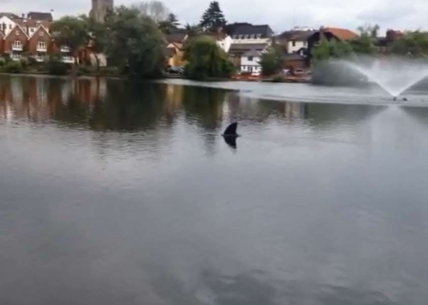 Shark sighting in Diss Mere ANL-150820-153559001