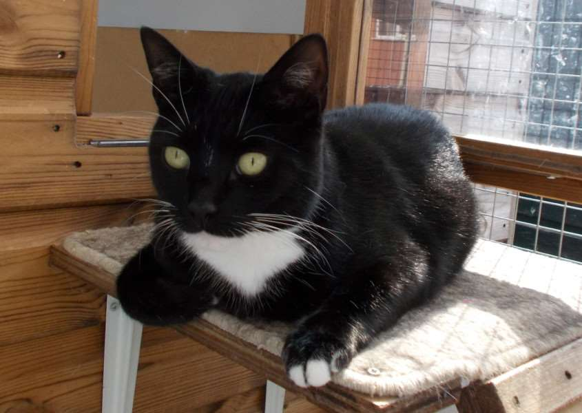 Princess. call Bury St Edmunds Cats Protection on 01449 674584 ANL-160617-143221001