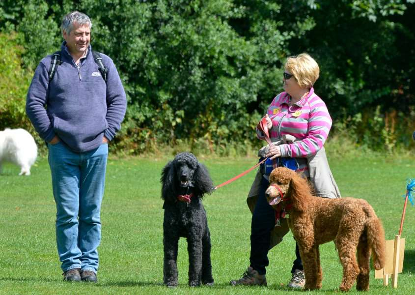 Fun Dog Show at Twinstead Cricket Club. ANL-150726-194929009