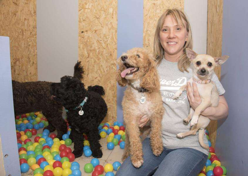 Home with Paws now runs a grooming parlour and has an area for dogs to 'play' together off lead. 'Manager Claire Burrowes with some happy dogs. Picture: Mark Westley.