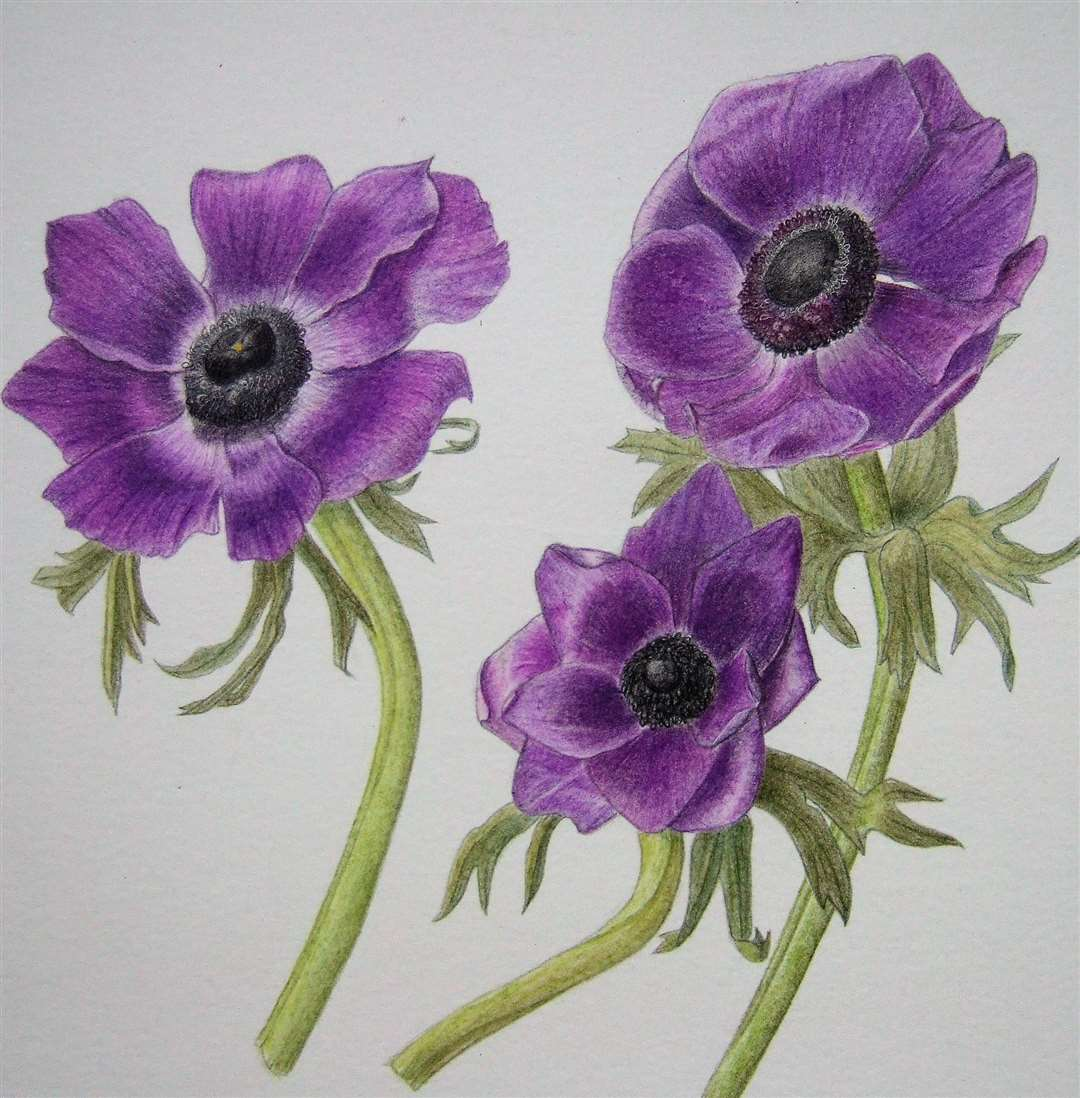 Suffolk Art Society- Anemones by Anne Foster (13821089)