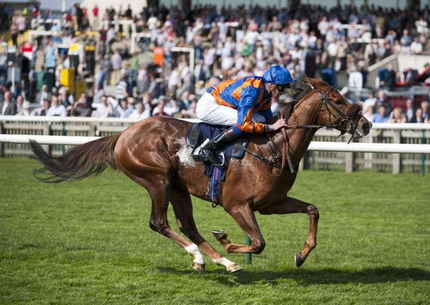 WITHDRAWN: Home Of The Brave will not contest the Darley July Cup. Picture: Mark Westley