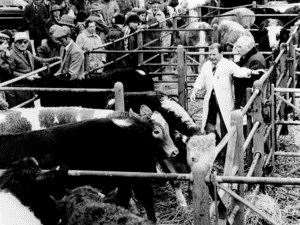 Sudbury cattle market in the 1970s. Picture: Sudbury Photo Archive