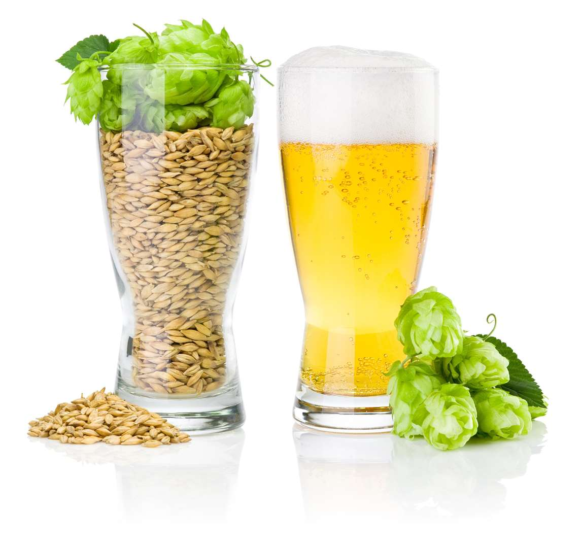 Glass of fresh beer and cup full of barley and hops isolated on white background (4406557)