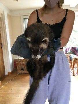Pippa Banham shared this photo of her daughter with a polecat they found in their piano in their Suffolk home (40847909)