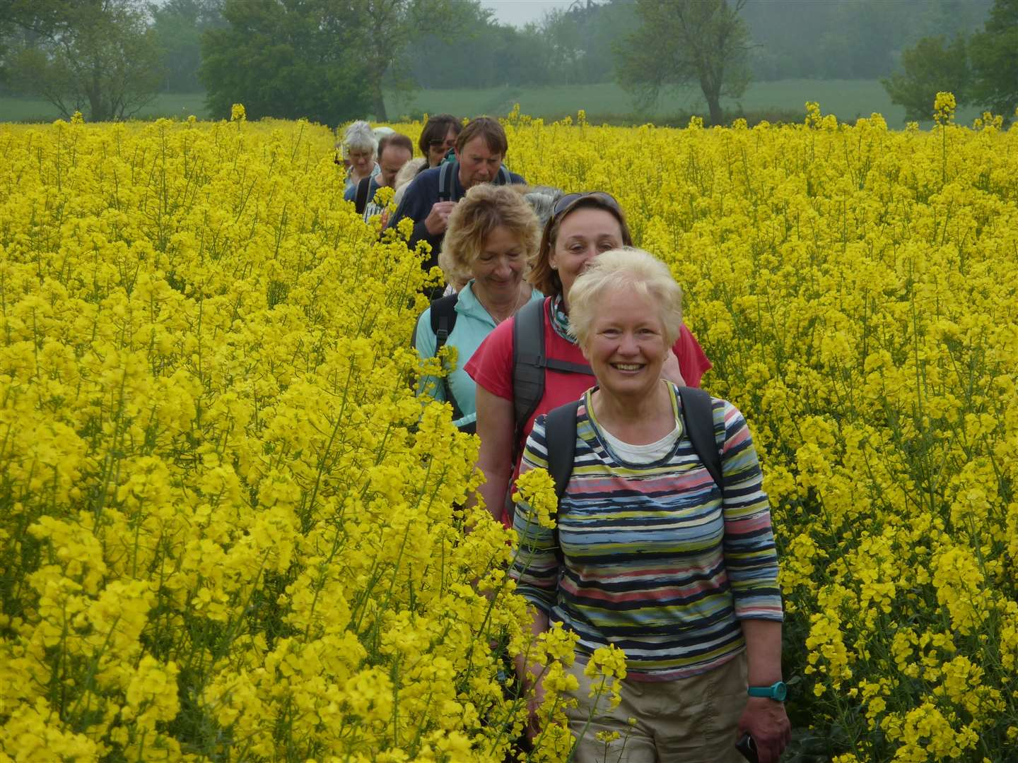 suffolk walking festival - previous event (9026706)