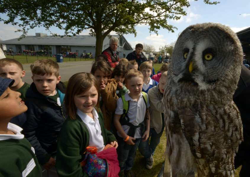 A great grey owl turns heads ANL-150427-212133009
