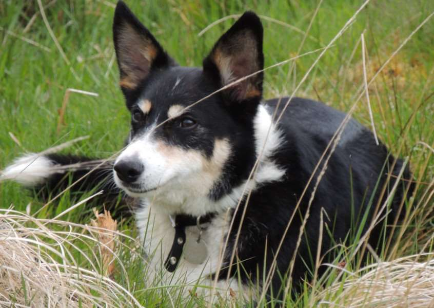 Margaret Burroughs' collie Jasper was killed by a motorbike on a track near Lakenheath