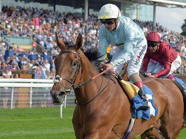Multiple listed race winner Abingdon is part of the Ballymacoll Stud dispersal at Tattersalls next month