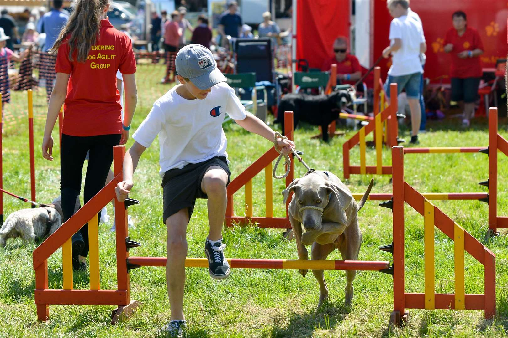 The Annual Hadleigh Show. A competitor in the Dog Agility Event. (2088004)