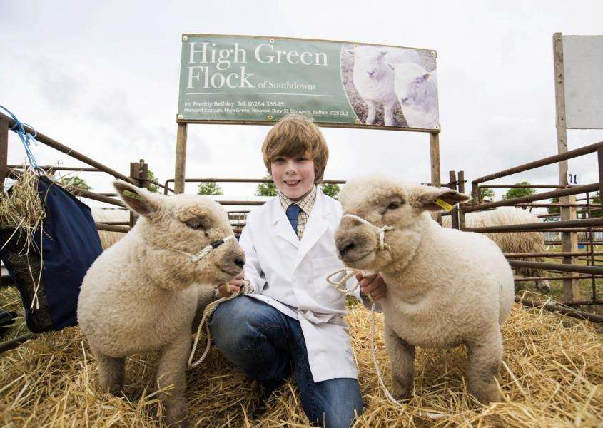 Freddy Bethley from Nowton with his Southdown sheep at last year's South Suffolk Show. 'Picture Mark Westley
